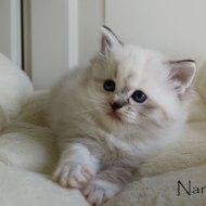 nanou_6