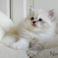 nanou_7