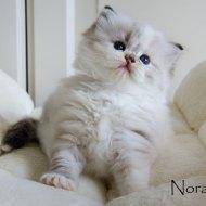 nora_7