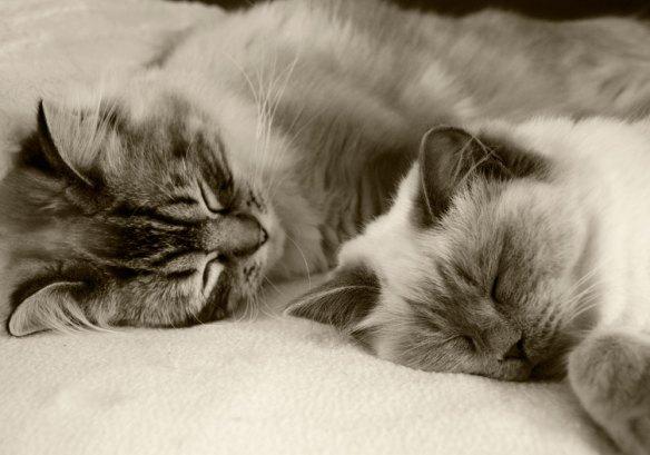 Herkules & Kloe