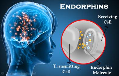 Las endorfinas