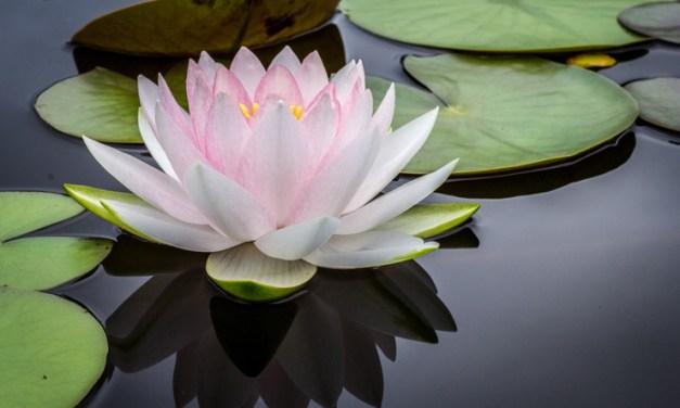 L'idea del karma – Pema Chodron