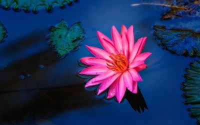 Le affermazioni della mente  – Paramahansa Yogananda