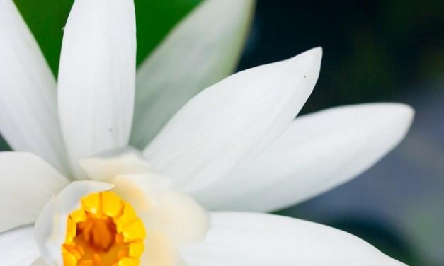 Successo e insuccesso – Yogananda