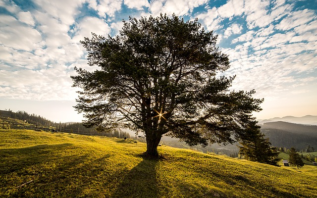 A walk in the park and meditation with a tree