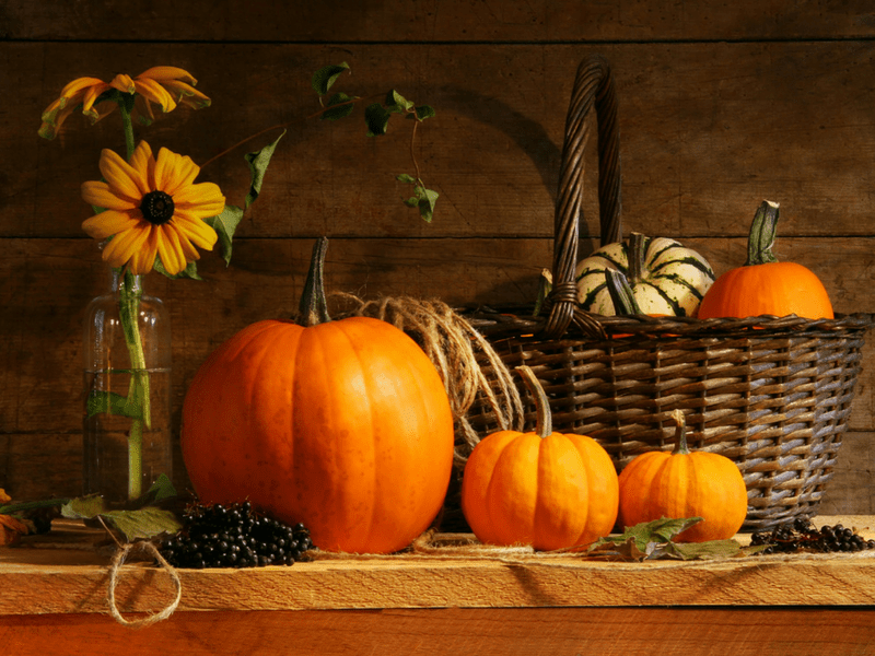 Happy Thanksgiving! 5 Things To Be Thankful For