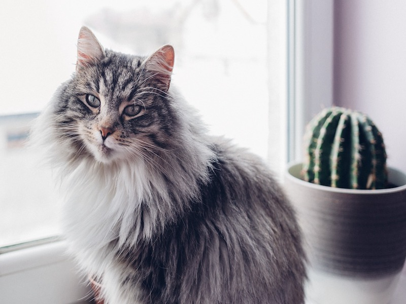 How Meditating with Your Cat Can Make Your Life Better