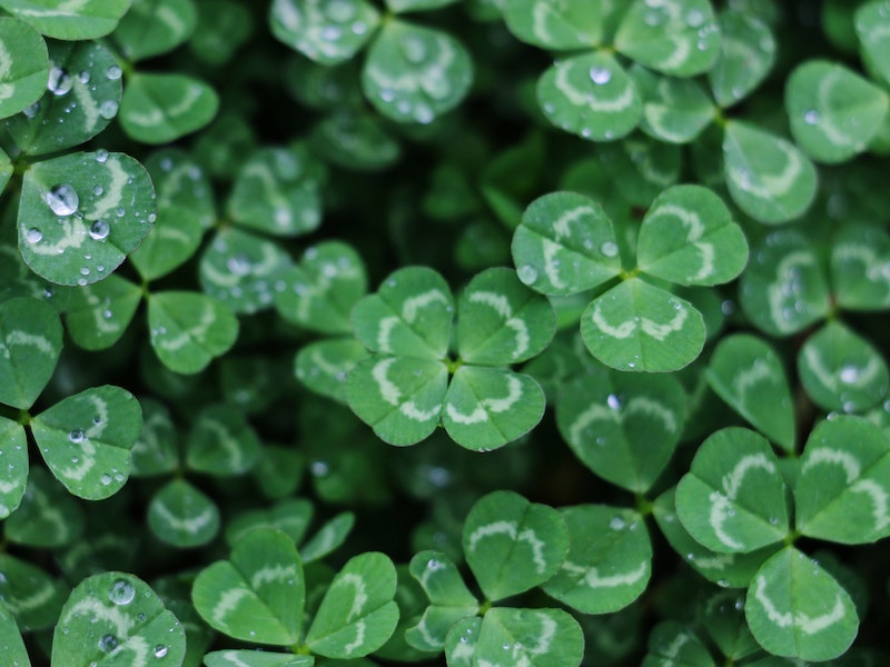 Powerful Ways to Bring Good Luck in Your Life