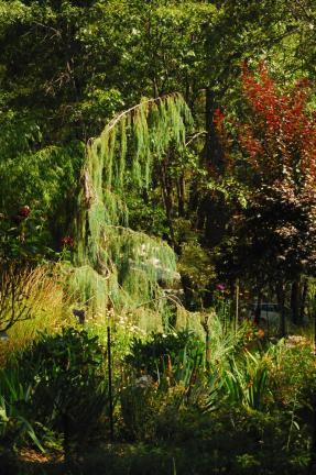 Diverse Flora