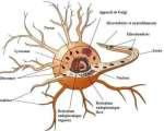 Anatomie et cytologie pathologiques