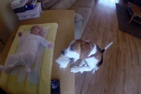 pas premata bebu
