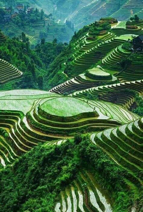 Banaue pirinčane terase, Filipini...