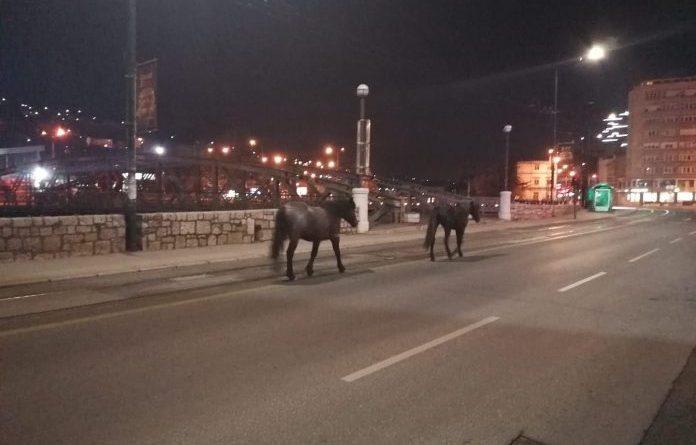 Konji sada mirno šetaju Sarajevom