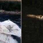 VIDEO: Medvjed svratio do uzgajališta školjaka u Malostonskom zaljevu, okupao se i otišao