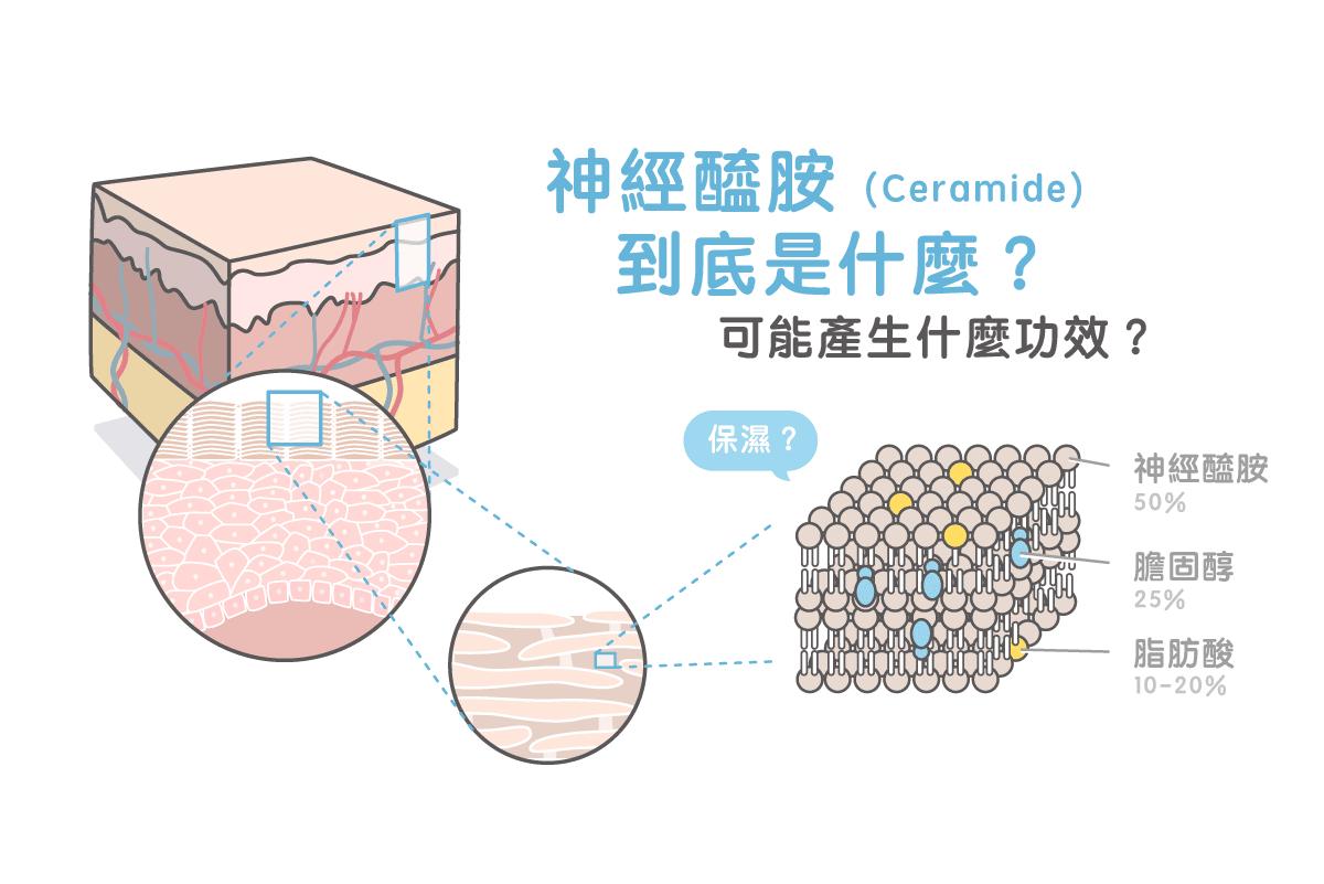 神經醯胺(Ceramide)到底是什麼?可能產生什麼功效?專家完整解密! | 美的好朋友