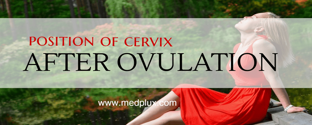 Cervix After Ovulation (If Pregnant or Not): Position and