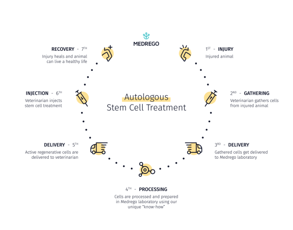 Autologous vs Allogeneic Stem Cell Therapy For Animals