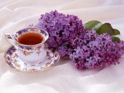сирень в чай