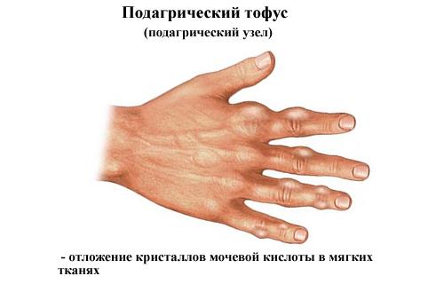 Obrazovanie-tofusov