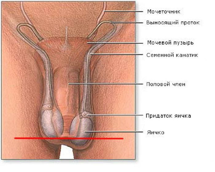 Гіпоплазія яєчок: особливості патології, причини, лікування