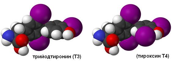 Трийодтиронин Т3 и тироксин Т4