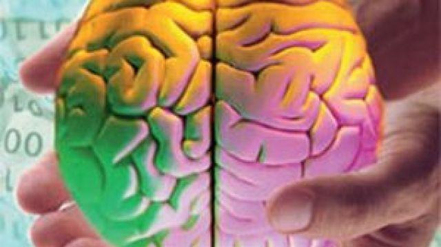 правое и левой полушария мозга