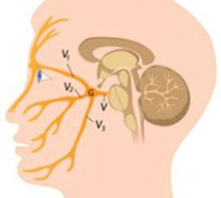 Расположение тройничного нерва на лице, фото 2