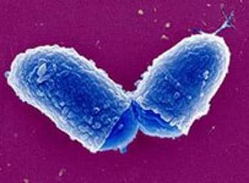 разделение коринебактерий