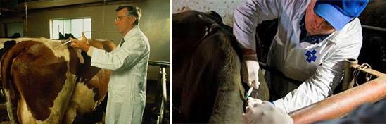 клинический осмотр животных и термометрия