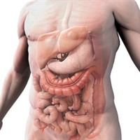 the_digestive_system[1]_200x200