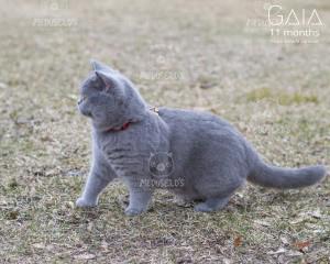 Gaia 11 months old