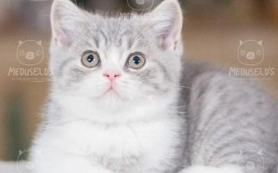 Kattungarna i G-kullen har fyllt 8 (nu 9) veckor