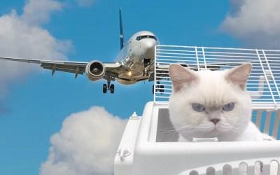 Flyga med katt – att tänka på när du bokar biljett och när du är på flygplatsen