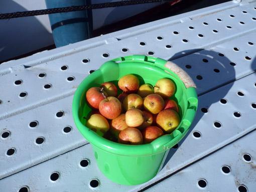 die erste Ladung für Apfelgelee