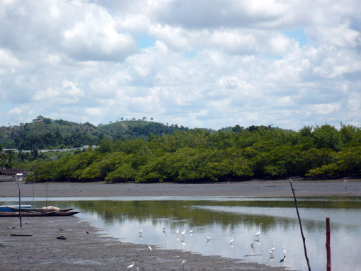 Mangroven in Maragojipe
