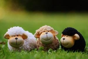 tips om beter te slapen - schaapjes