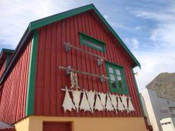 Gedroogde vis in Stamsund
