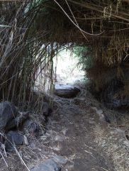 14 Mijn dagelijkse wandeling naar Fataga