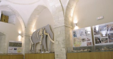 Paleontological Museum Rethymnon