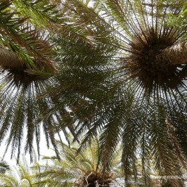 Vai - largest palm forest in Europe with a beautiful sandy beach
