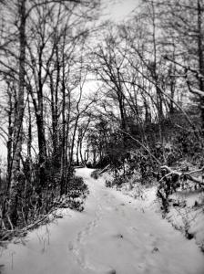 Snowy trail through the woods