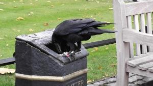 afvalbak die kraaien aantrekt en zorgt voor vogeloverlast