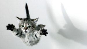 pulo gato