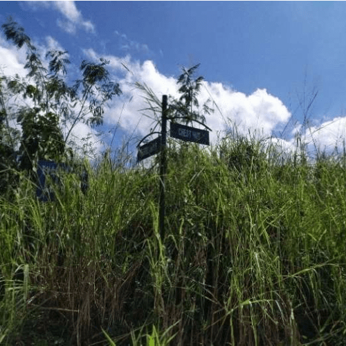 Bank foreclosed Eastland Heights (formerly Forest Hills Golf & Residential Estates), Brgy. Inarawan, Antipolo, Rizal - Image 6