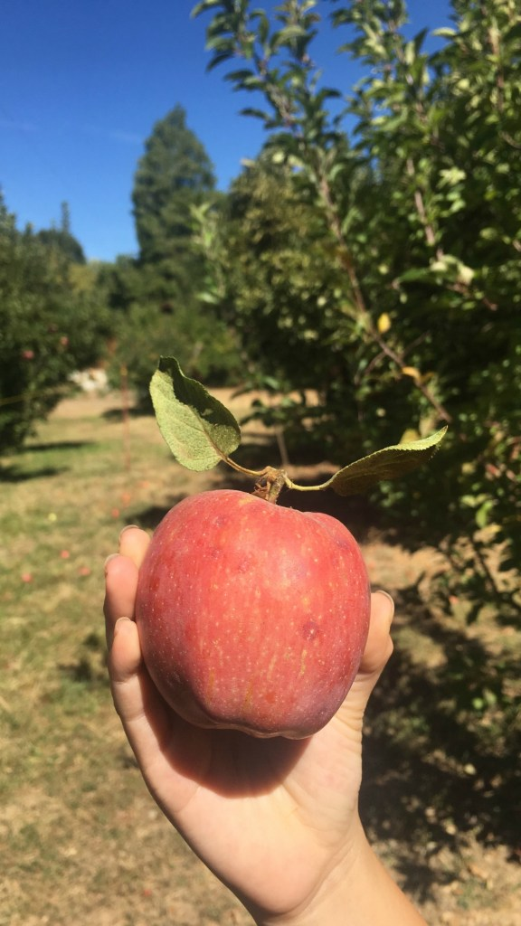 Is apple picking on your fall bucket list? If you live in Southern California, we suggest visiting Oak Glen where you can choose from several ranches and farms to pick apples, eat pie, snack on cider donuts and more!