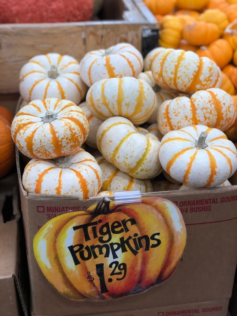 Selection of pumpkins found at Trader Joe's including Tiger Pumpkins!