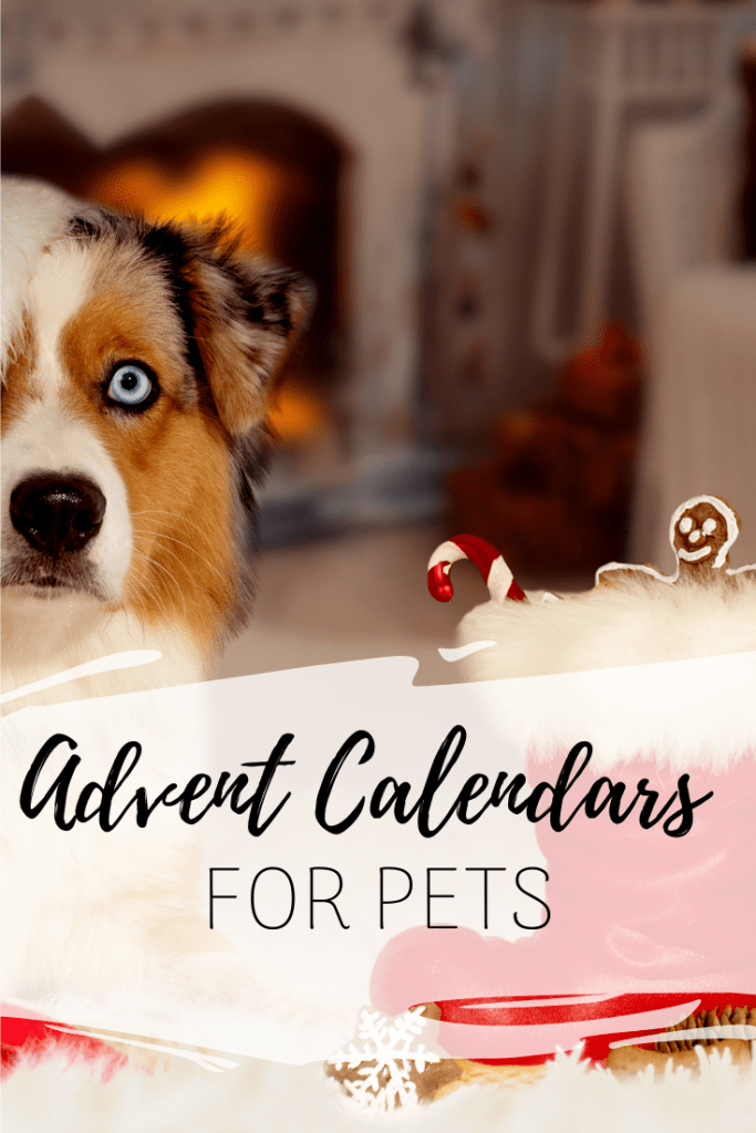 Advent Calendars for Pets - Give the dog or cat in your life the love they deserve with these advent calendars made just for them!
