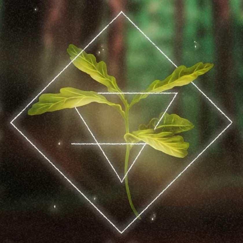 Treeasure4