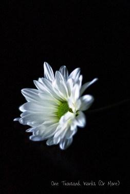 Bright Daisy