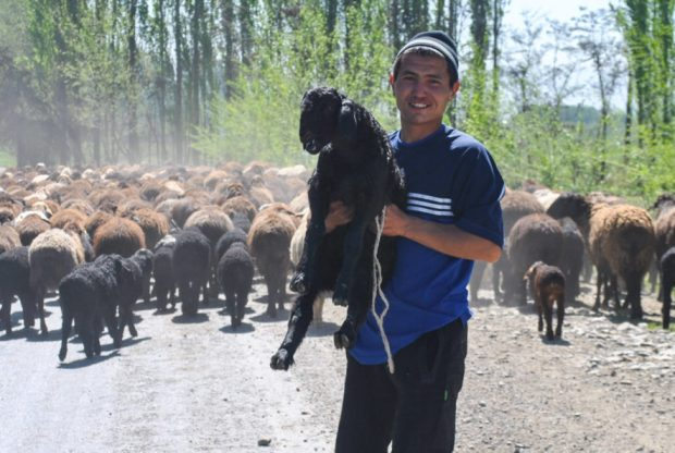 a Kyrgyz man holding one sheep of his flock